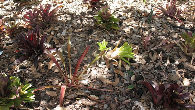 Florida Friendly Yard Ideas 2009