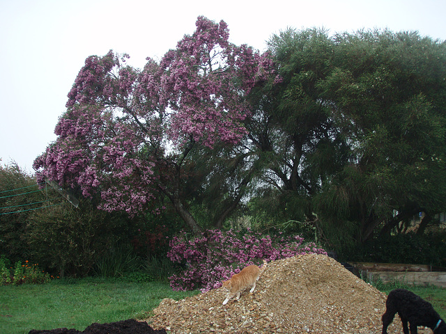 pink tree collapse