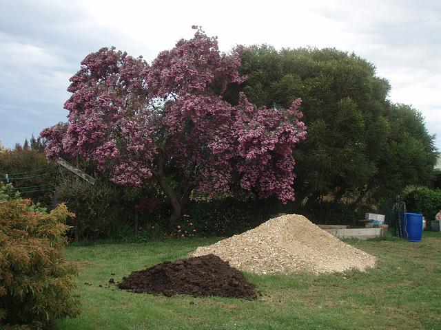 pink tree in yard