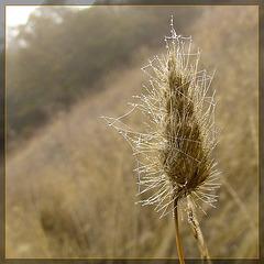 Dew-Coveed Web on Wild Grass