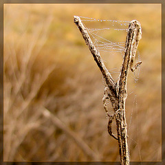 Dew-Covered Web: Peace Be With You