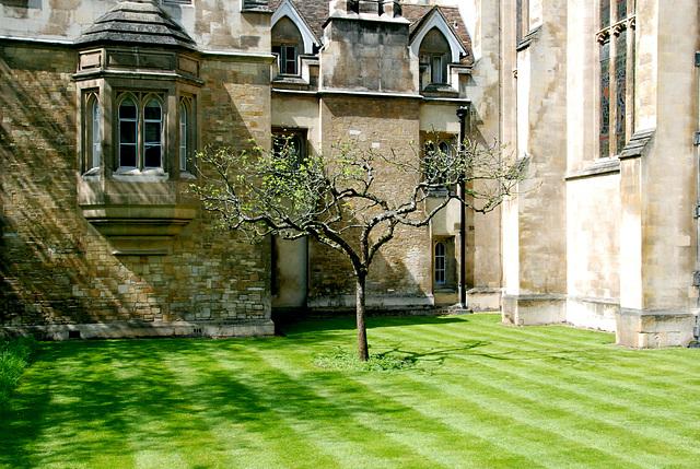 Cambridge: Newton's Apple Tree