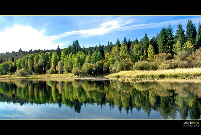 Green Trees Reflecting on Upper Klamath Lake