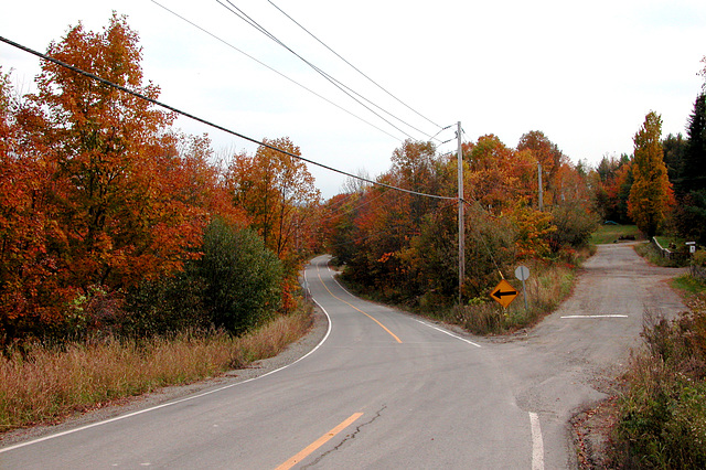 Road with autumn colours