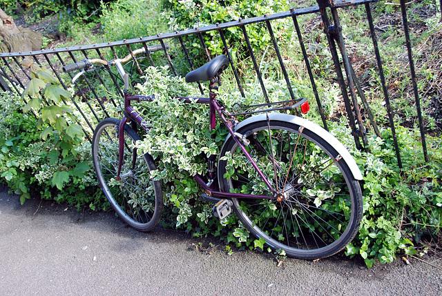 Cambridge: bicycles are popular in Cambridge