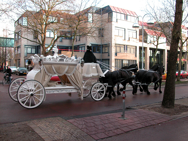 White carriage and black horses