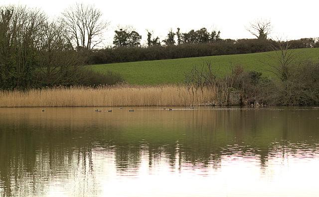 Pebsham Pond