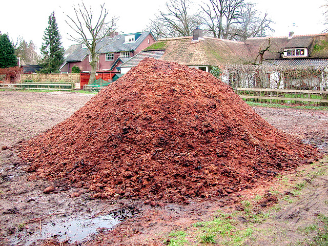 A pile of horse manure