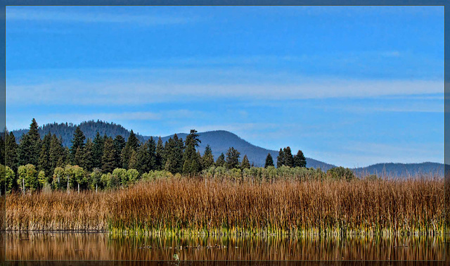 Reeds Against the Sky on Upper Klamath Lake