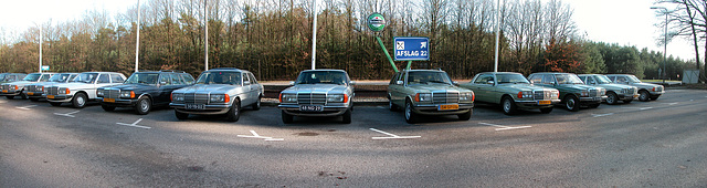 At the Mercedes-W123 meeting