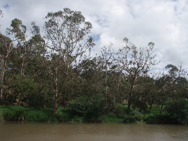bat colony at Yarra Bend