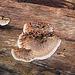 Smash Fungi