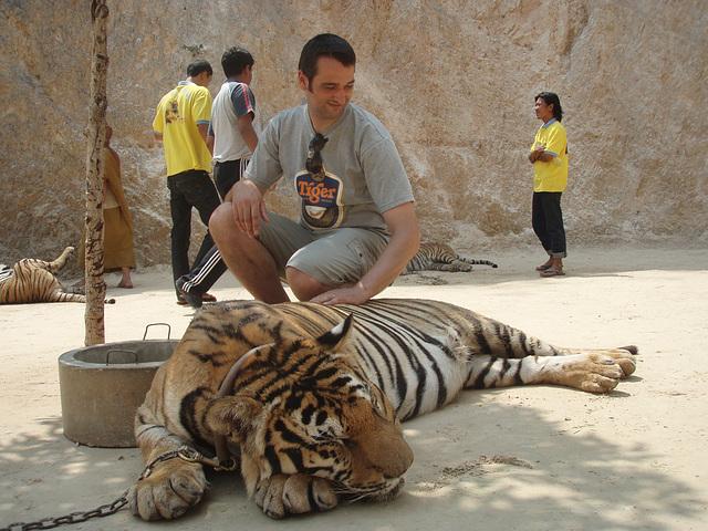 tiger patting