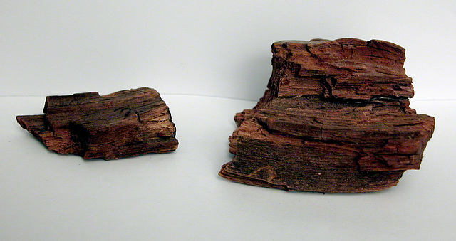Wood from the Academy Building in Leiden