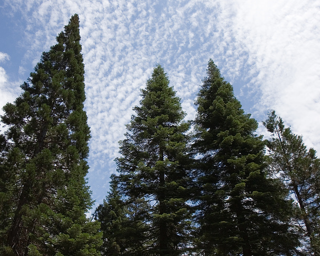Geometrical Trees