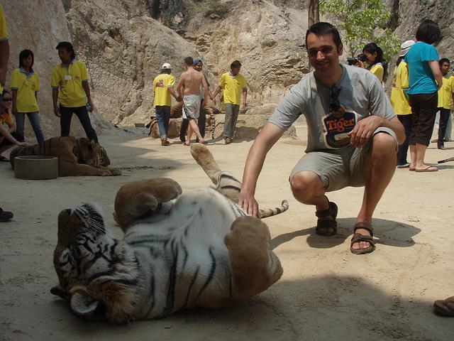 tiger belly rub!