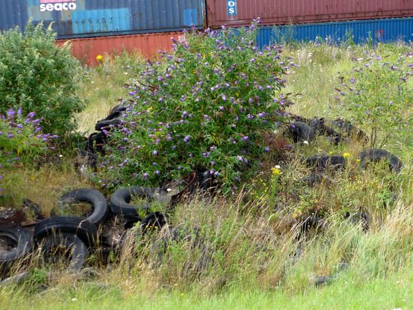 Tyres with buddlia