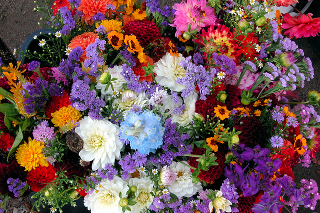 Portland images: flowers at the farmer's market