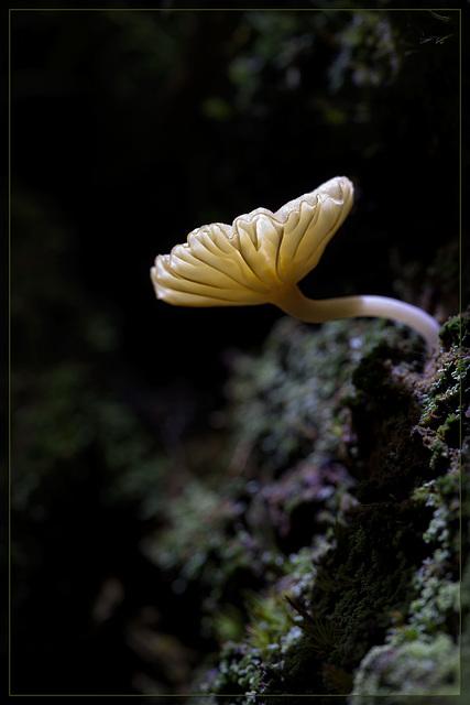 Glowing Mushroom [Flickr Explore #8]