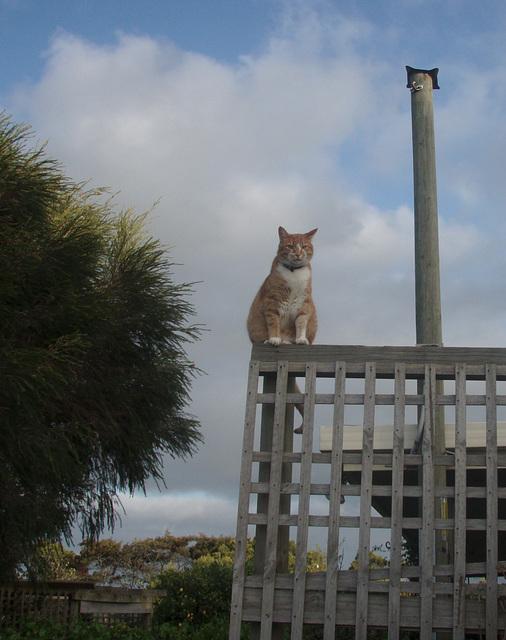 Zetor surveying his domain