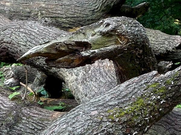 Natural sculpture