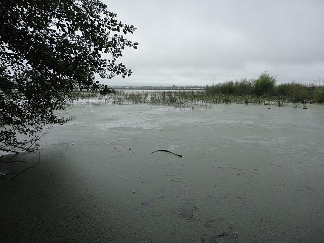 Lake Wendouree - full again at last
