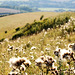 Fluff South Downs