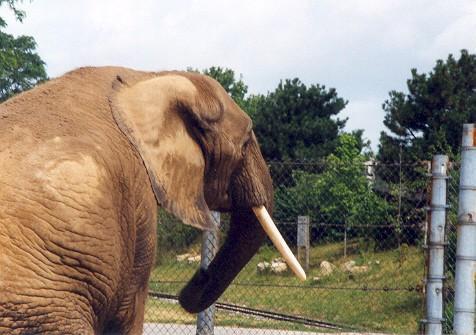 Elephant Waiting
