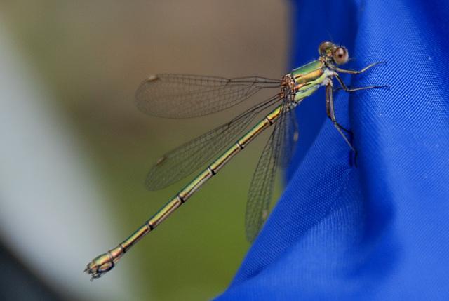 Dragonfly on my bike saddle