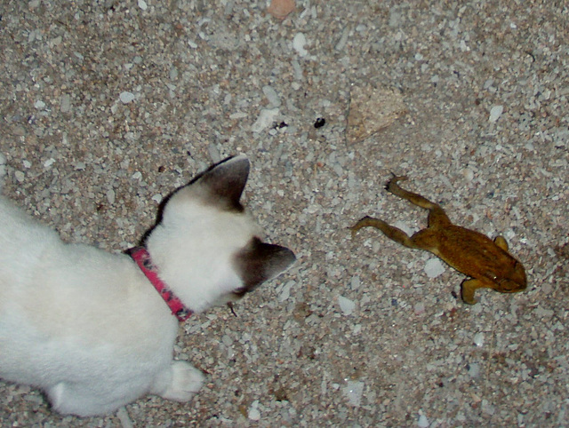 kitty finds a frog 2