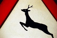 Warning: deer