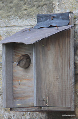 How many birds do you know who live in a house with a Ballachulish slate roof?