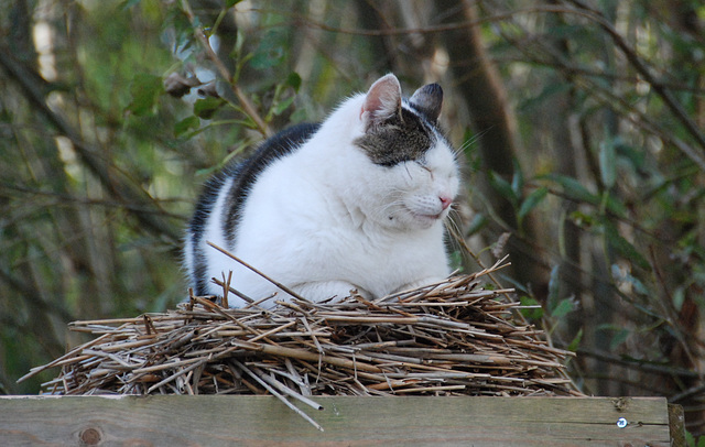 Cat trying to be a bird