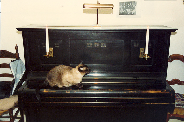 One of our cats on the piano