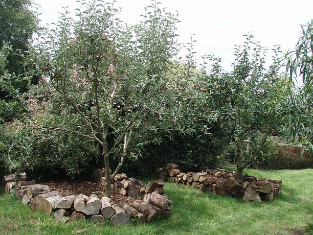 apple tree enclosures