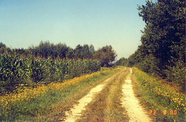 Old pics: road in Burgundy
