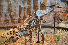 T-Rex – Carnegie Museum of Natural History, Pittsburgh, Pennsylvania