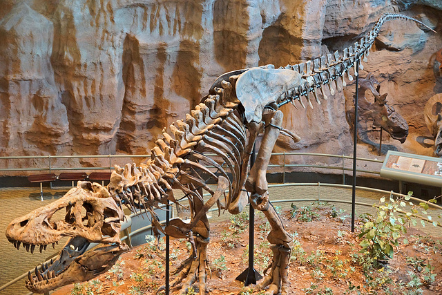T-Rex – Carnegie Museum of Natural History, Pittsburgh, Pennsylvania