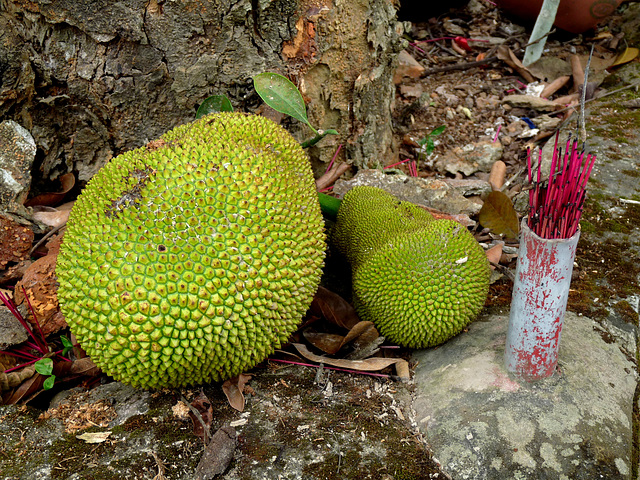 Jack Fruit and Incense