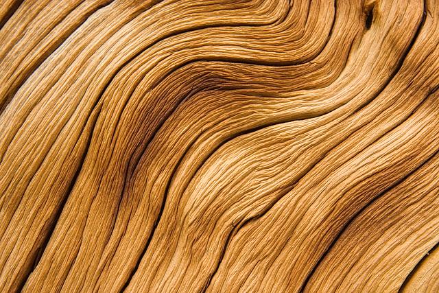 Tree Texture III