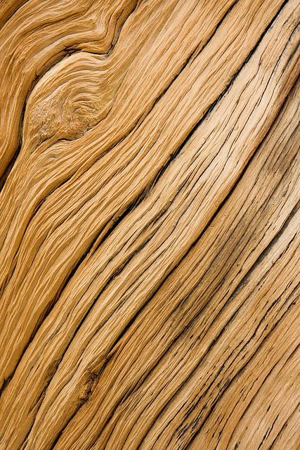 Tree Texture II