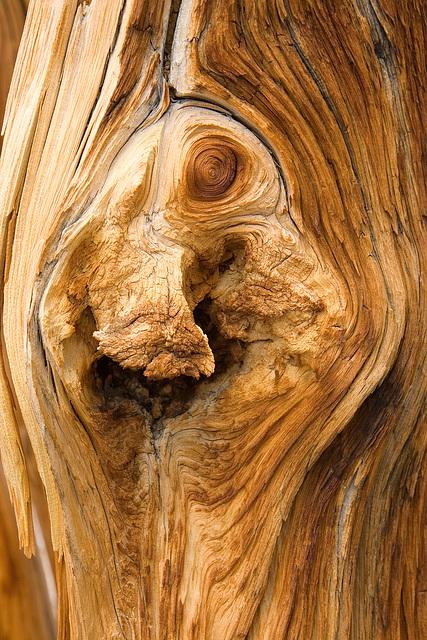 Tree Texture IV