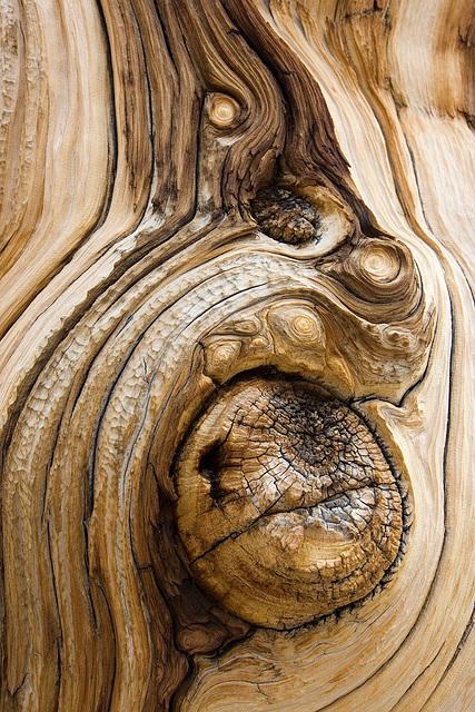 Tree Texture VI