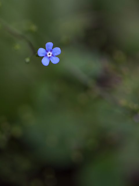 1-10 Project: 5 Blue Petals in a Sea of Green
