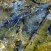 Geyser Runoff