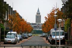 Nice view line in Rijnsburg