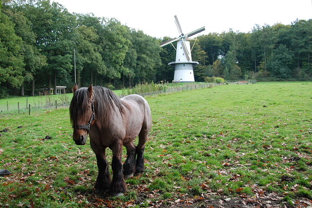 A visit to the Open Air Museum (Heritage Park): happy horse and a windmill