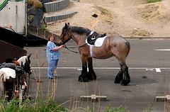 Bell-bottomed horse