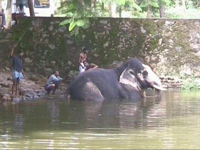 Kerala Washing Elephants