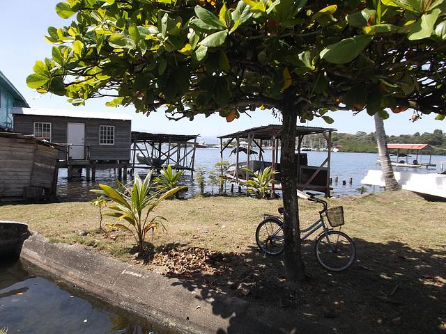 Shady bike / Vélo à l'ombre.